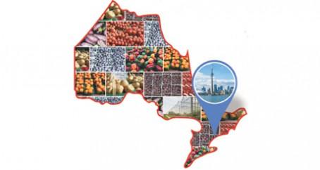 Toronto Produce Trade_MS