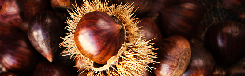 Chestnuts Produce Blue Book