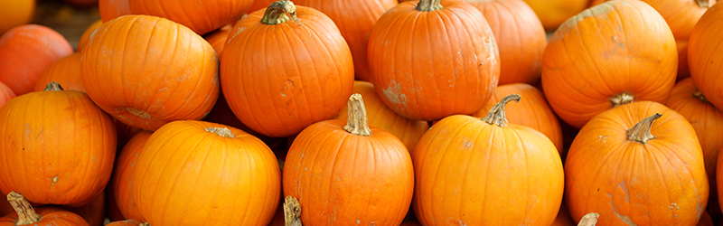 Pumpkins Produce Blue Book