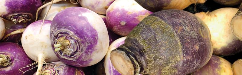 Turnips & Rutabagas